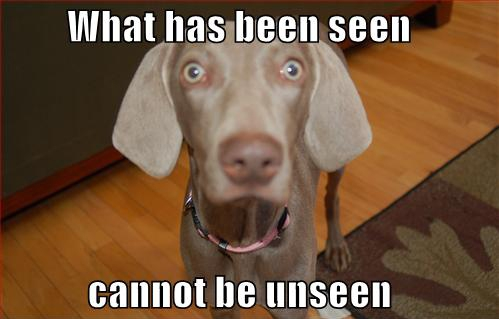 What has been seen cannot be unseen! (dog version)