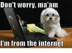 Don't worry, ma'am, i'm from the internet (white dog version)