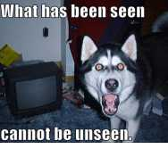 What has been seen cannot be unseen! (scared dog version)