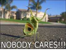 Nobody cares!!! (mantis version)