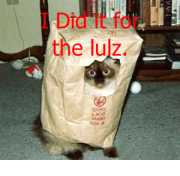 I Did it for the lulz. (cat in pac version)